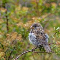 ...важные птицы :: Сергей Долженко