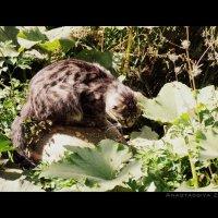 Котик на тыкве :: Анастасия Зубарева