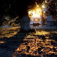 Закатное солнце :: Данил Антонов