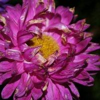 Цветы :: Александр Леонов