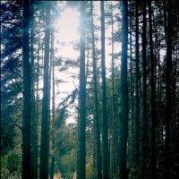 hijsi, mobilography, forest :: hijsi sevole