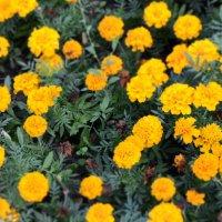 Просто цветы :: Дмитрий Лысенко