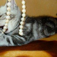 мой котик :: Ольга Перевицких