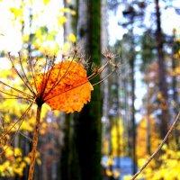 Осенняя прозрачность :: Виктория Чагина