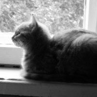 Соседский кот в 7. 30 утра) :: Maria Sulima