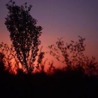 Закат в поле :: Сергей Петренко