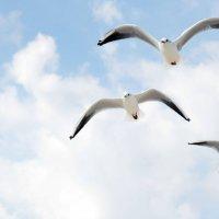Чайки :: Тамара Крутова