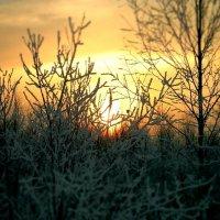 Зимний закат :: Натали V