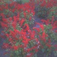 фото цветы :: дмитрий савин