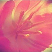 цветок :: Lana Pipakina