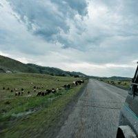 Старо-Австрийская дорога (Казахстан) / 2012 удалитьредактировать :: Александр Лайков