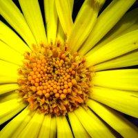 цветок :: Евгения Рудякова