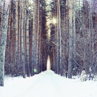 Тропа в лес :: Николай Шлыков