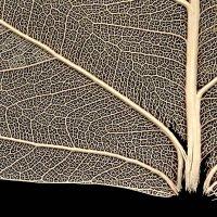 Кровеносная система растения :: Александр Титов