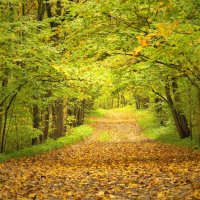 Осень в парке :: Максим Судаков