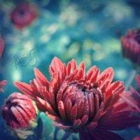 цветы :: Tanya Rodionova