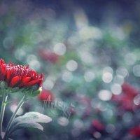 цветы в сентябре :: Tanya Rodionova
