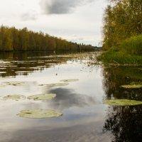 река Янисйоки :: Marina Tikhonova