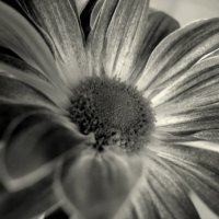 цветочное :: Юлия Годовникова