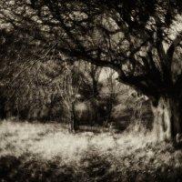 Дерева :: Андрей Селиванов