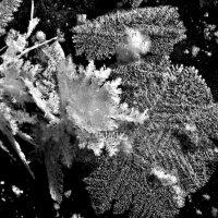 снежное кружево :: Елена Маскалева