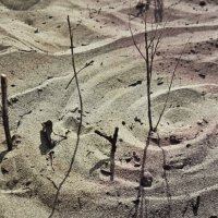 песок :: Lana Pipakina