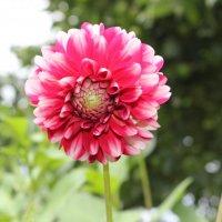 цветы :: Владимир Бернацкий