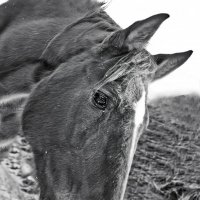 Лошадь в загоне :: Николай Шлыков