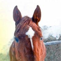 Лошадь Зимой :: Николай Шлыков