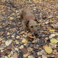 Осень в парке :: Наталья R
