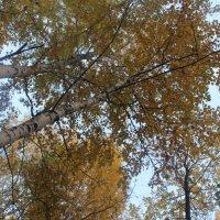 Осенняя листва :: Наталья R