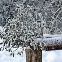 Мороз :: Игорь Мукалов
