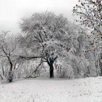 Зима :: Игорь Мукалов