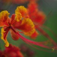 цветок в парке Коулун, Гонконг :: Tatiana Litvinova