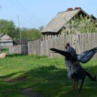 Самый важный на деревне. :: Александра Черникова