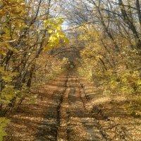 Осенняя :: Андрей Тор