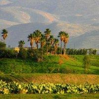 jordan :: mohammad al-abed