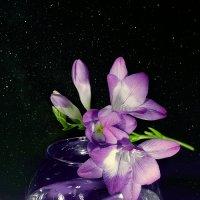 Ночной аромат фрезии :: Виктор Ковчин