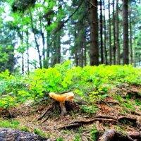 In the Czech forest :: Оксана Рыськова