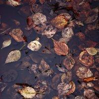 Моя мокрая осень :: Настасья Матвеева
