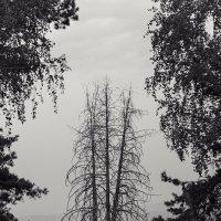 в обрамлении леса... :: Alexandr Safronov