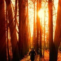 Волшебный лес :: Женя Рыжов