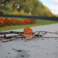 Осень. Пора на прогулку :: Наталья Natalya