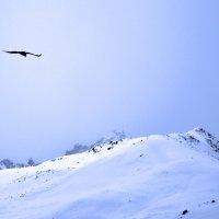 Орёл в снегах. :: Крис Ван дер Вальке