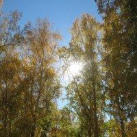 Осень :: Юлия Калунина