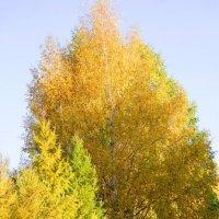 Осень :: Светлана Мосягина