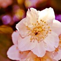 муха и цветок :: marcos 13