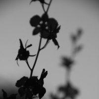 Flower :: Анастасия Аксенова