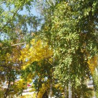 осень в красках :: тамара антошкина