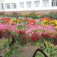 цветы в клумбе :: тамара антошкина
